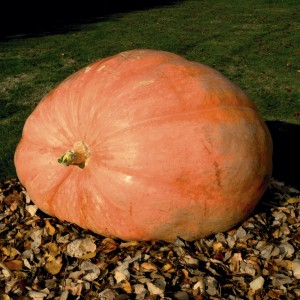 http://www.freesamples.co.uk/wp-content/uploads/2012/04/Free-Packet-of-Giant-Pumpkin-Seeds-300x300.jpg