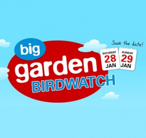 Free RSPB Big Garden Birdwatch Pack 300x285 Free RSPB Big Garden Birdwatch Pack