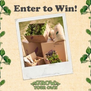 Win Seasonal Veg Herb Seeds with Kettle Chips 300x300 Win Seasonal Veg & Herb Seeds with Kettle Chips
