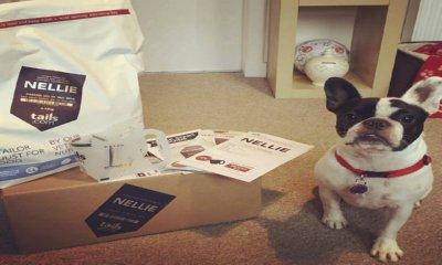 Free Dog Food Bag – Worth £27