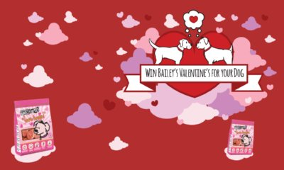 Free Barking Heads Love Heart Dog Treats