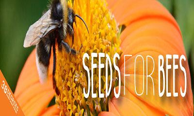 Free Bee Seeds Pack