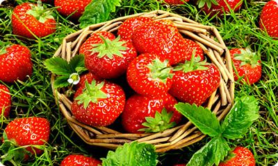 Free Strawberry Plant