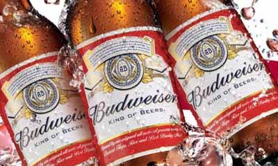 Free Bottle of Budweiser