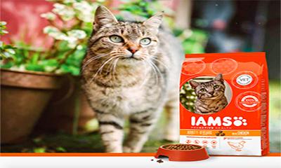Free IAMS ProActive Health Sample Box