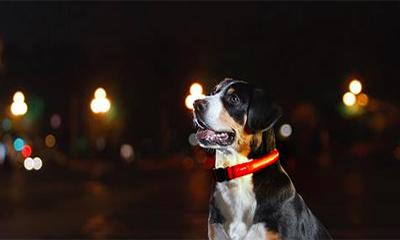 Free LED Dog Collar