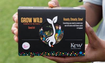Free Grow Wild Flower Seeds