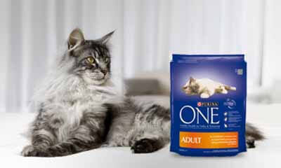 Free Purina ONE Cat Food