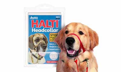 Free Halti Dog Collar