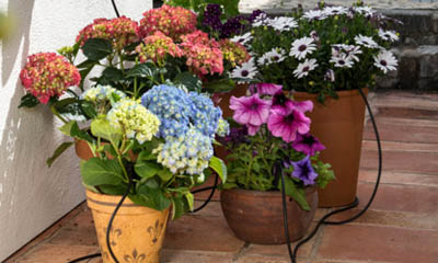Free Plant Pot Watering Kits