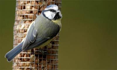 Free Bird Watching Pack