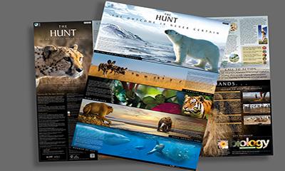 Free BBC Wildlife Poster
