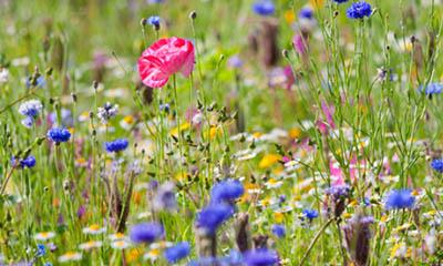 Free Garden Bulbs & Seed Pack