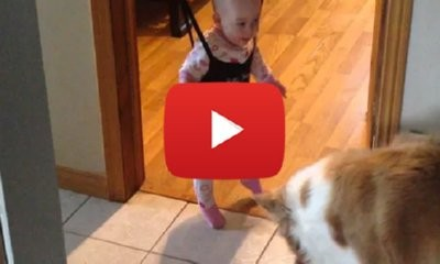 Dog Teaching A Baby To Jump