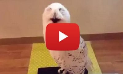 This Laughing Owl Is The Only Thing You Need To See Today