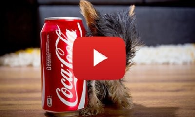 The World's Smallest Dog: Tiny Dog Terrier
