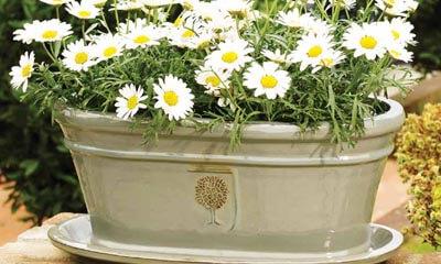 Free RHS apta Plant Pots