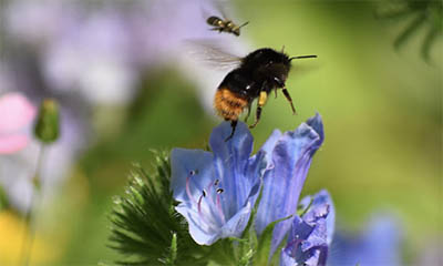 Free Bee-Friendly Wildflower Seeds